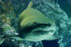 Paris aquarium offers people to sleep inside their shark tank