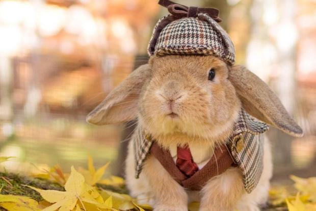 Meet the world's most stylish bunny