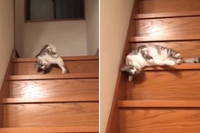 This lazy cat can't handle going down the stairs