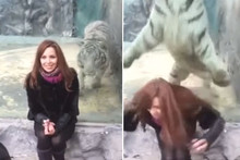 Zoo tiger lunges at woman