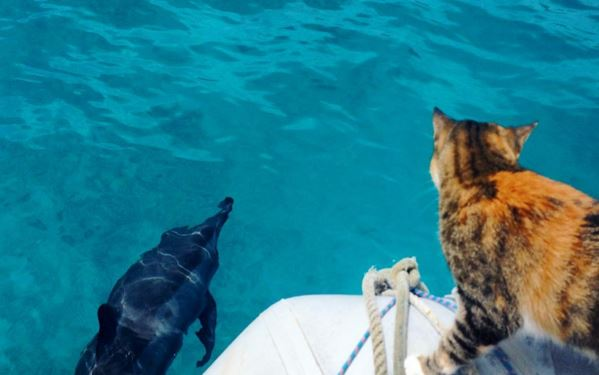 Woman sails around the world with her cat