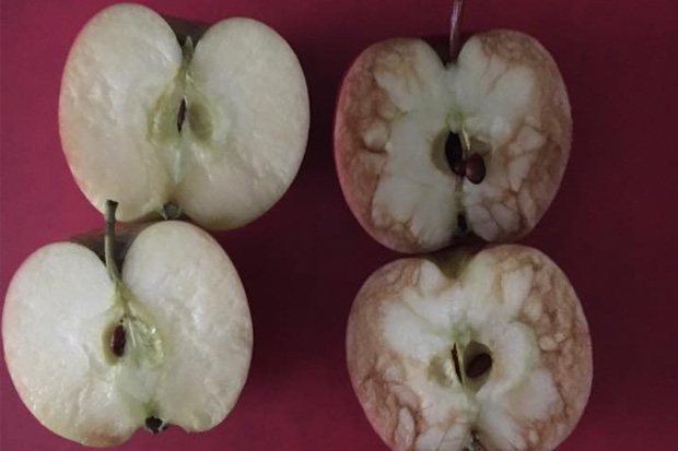 School teacher's two apples explains the powerful effect bullying has