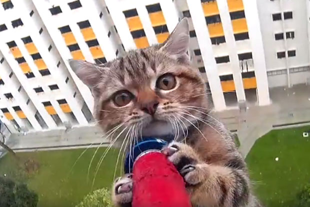 Kitten's precarious rescue attempt from high-rise captured