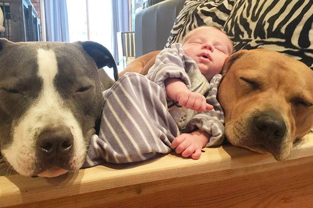 Adorable photos show family pets caring for their newborn brother