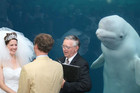 Beluga whale goes viral after photobombing wedding pic